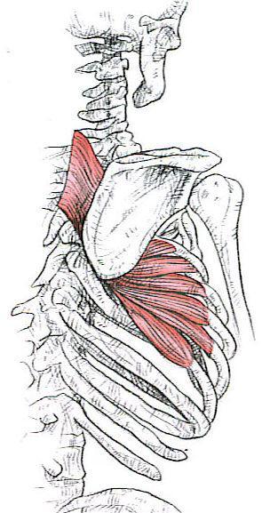 Common Crossfit Injuries: Shoulder Impingement Part 2